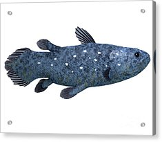 Coelacanth Fish On White Acrylic Print by Corey Ford