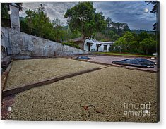 Coffe Production Acrylic Print