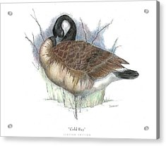 Cold Bay Acrylic Print by David Weaver