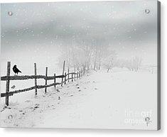Cold Crow Acrylic Print
