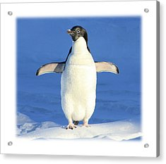 Cold Feet - Penquin In The Snow Acrylic Print