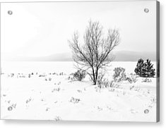 Acrylic Print featuring the photograph Cold Loneliness by Hayato Matsumoto