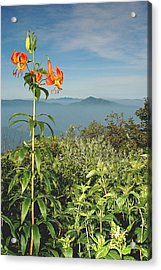 Cold Mtn. And Turk's Cap Lily Acrylic Print by Alan Lenk