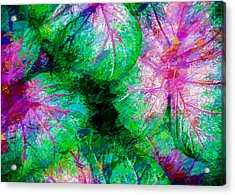 Acrylic Print featuring the photograph Coleus by Paul Wear