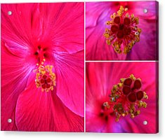 Collage With Red Hibiscus  Acrylic Print by Madalena Lobao-Tello