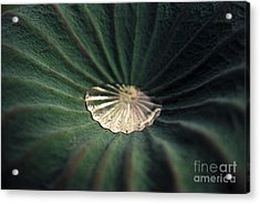 Collected Acrylic Print