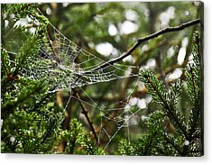 Collecting Raindrops Acrylic Print