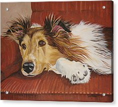 Collie On A Couch Acrylic Print by Laura Bolle