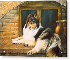 Collie On The Hearth Acrylic Print by Karen Coombes