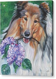 Collie With Lilacs Acrylic Print by Lee Ann Shepard