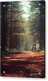 Colligan Woods Acrylic Print
