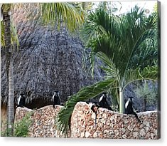 Colobus Monkey Resting On A Wall Acrylic Print