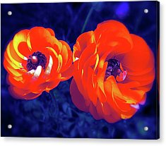 Acrylic Print featuring the photograph Color 12 by Pamela Cooper