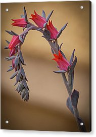 Color And Curve Acrylic Print