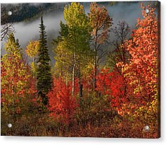 Color And Light Acrylic Print by Leland D Howard