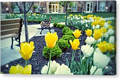 Color At College Acrylic Print by Dustin Soph