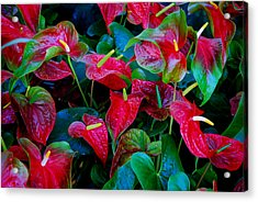 Acrylic Print featuring the photograph Color Blast by Nancy Bradley