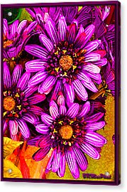 Color Bright Acrylic Print by Barbara MacPhail