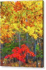 Color Change Of Autumn Leave 2 Acrylic Print
