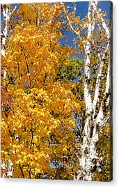 Color In The Trees Acrylic Print