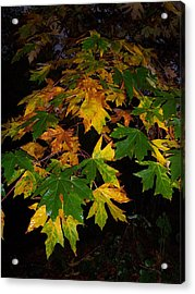 Color Me Fall Acrylic Print by Ken Day