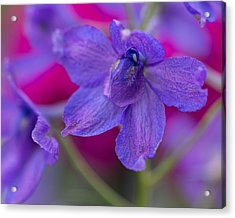 Acrylic Print featuring the photograph Color Me Spring by Julie Andel