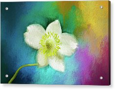Color My World 01 Acrylic Print by Darren Fisher