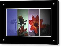 Color My World Acrylic Print by Holly Ethan