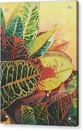 Color Of Crotons Acrylic Print by Judy Mercer