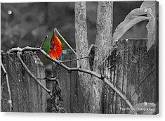 Color Of Fall Acrylic Print