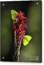 Acrylic Print featuring the photograph Color On Citico by Douglas Stucky