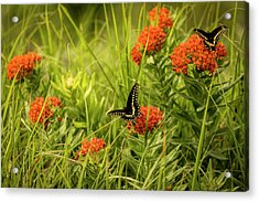 Acrylic Print featuring the photograph Color On Color by Scott Bean
