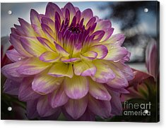 Color Starburst Acrylic Print
