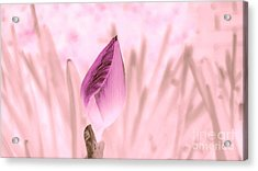 Color Trend Flower Bud Acrylic Print