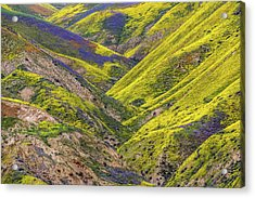 Acrylic Print featuring the photograph Color Valley by Peter Tellone