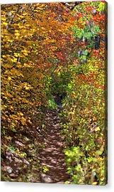Cascade Mountain Range Color Vortex Acrylic Print