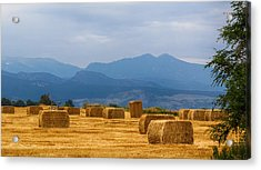 Colorado Agriculture Farming Panorama View Pt 2 Acrylic Print by James BO  Insogna