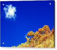 Acrylic Print featuring the photograph Colorado Blue by Karen Shackles