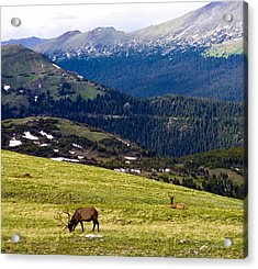 Colorado Elk Acrylic Print by Marilyn Hunt