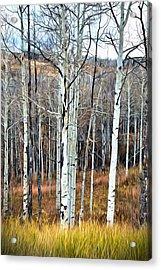 Colorado Fall Aspen Acrylic Print by James Steele