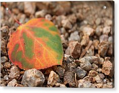Colorado Fall Colors Acrylic Print