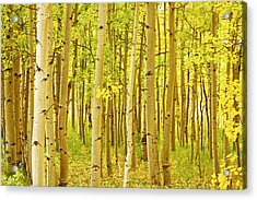 Colorado Fall Foliage Aspen Landscape Acrylic Print by James BO  Insogna