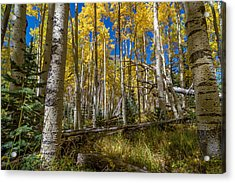Colorado Fall Hike In The Aspens Acrylic Print by Michael J Bauer