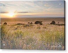 Colorado Field Sunset Landscape Acrylic Print by Andrea Hazel Ihlefeld