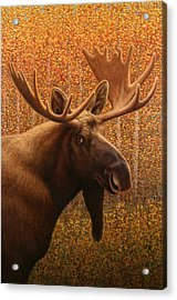Colorado Moose Acrylic Print
