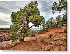 Colorado National Monument Acrylic Print