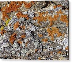 Colorado Rock Life Acrylic Print