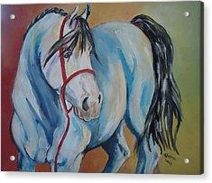 Colored Pony Acrylic Print