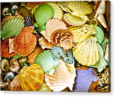Colored Shells Acrylic Print by Marilyn Hunt