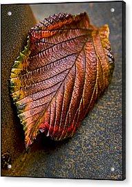 Colorfall Acrylic Print by Daniel G Walczyk
